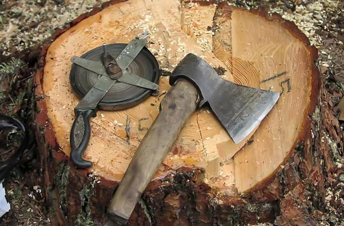Вологжанин пытался вывезти незаконно срубленные деревья