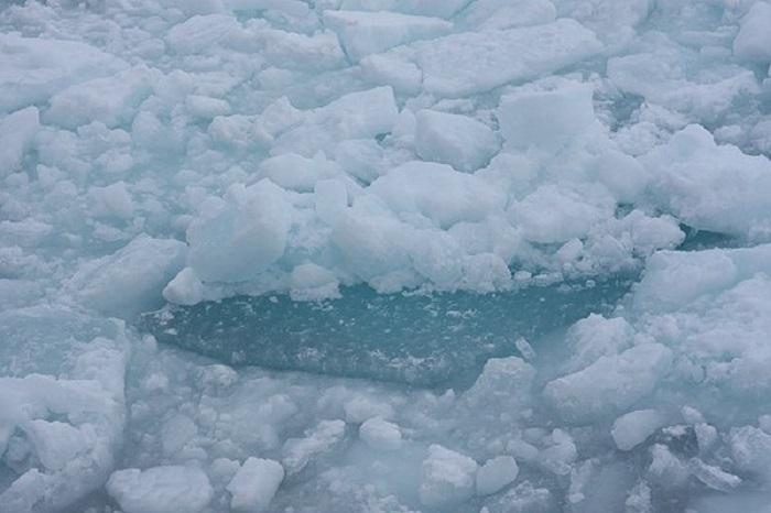 5-летний мальчик утонул в Вологде