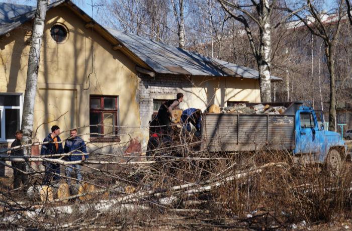 Жители дома в центре Вологды защищают березовую аллею от вырубки