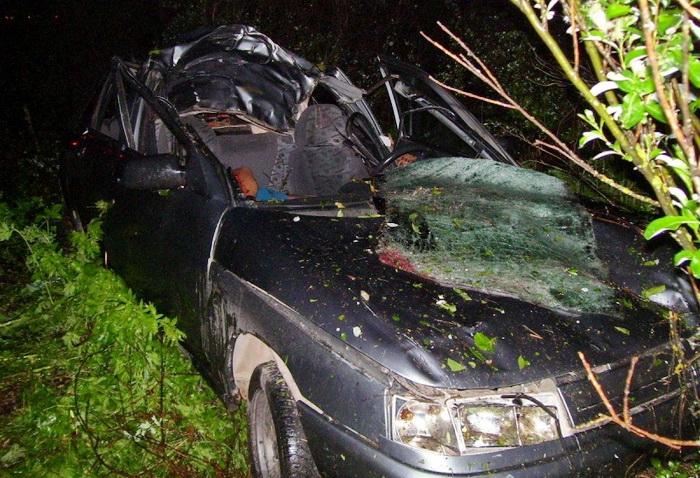 В Череповецком районе в ДТП с лосем погиб мужчина