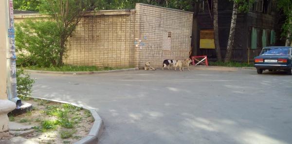 Кто спасёт от бродячих собак жильцов домов Зосимовская 66,64,68