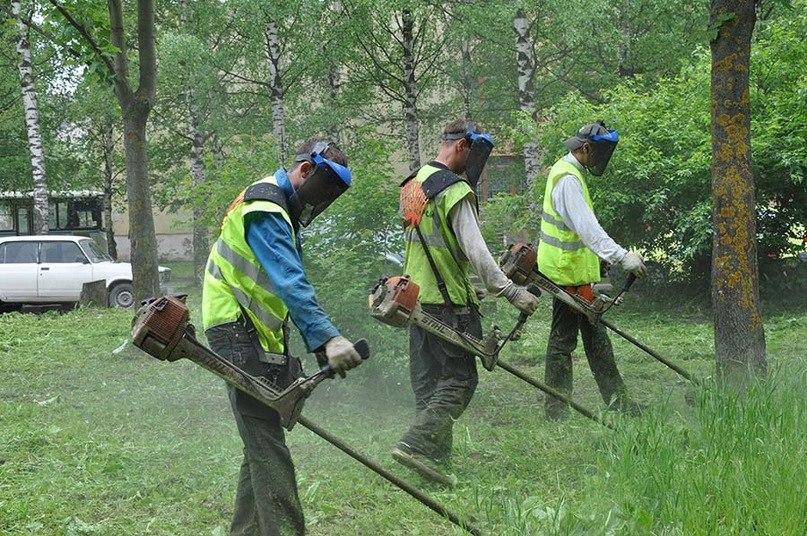 «Молодёжные трудовые бригады» продолжают принимать вологжан