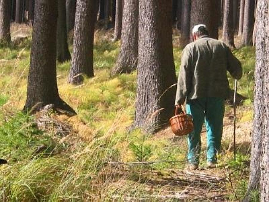 79-летний сокольчанин прошёл 12 километров, блуждая по лесу