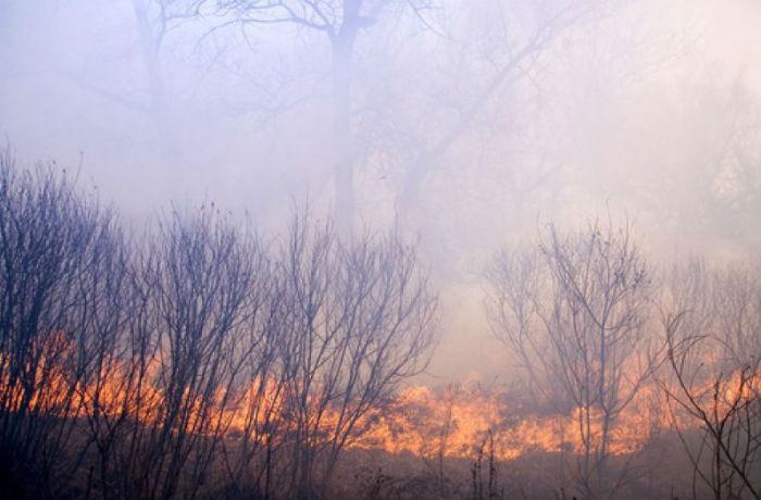 В Вологодском районе ожидается пожароопасность 5 класса