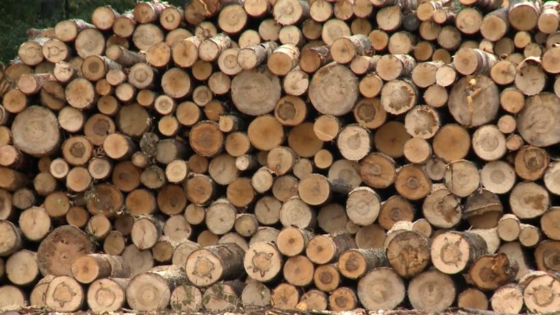 Леса на несколько миллионов рублей вырубил житель Вологодской области