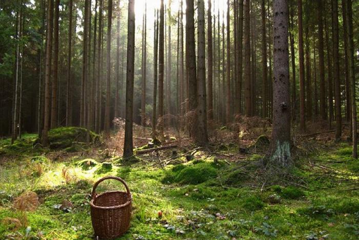 Вологжанка ушла за грибами, опоздала на электричку и пропала в лесу