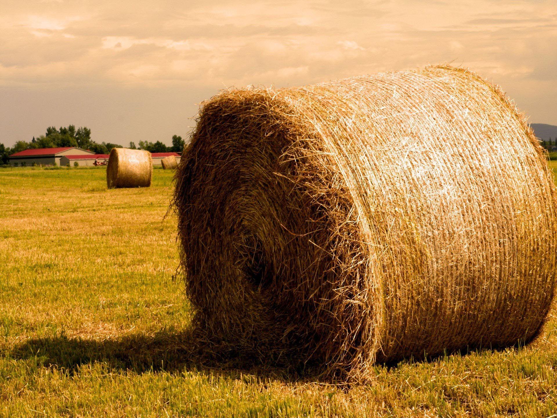 Пытаясь согреться, вологжанин сжег несколько тонн сена