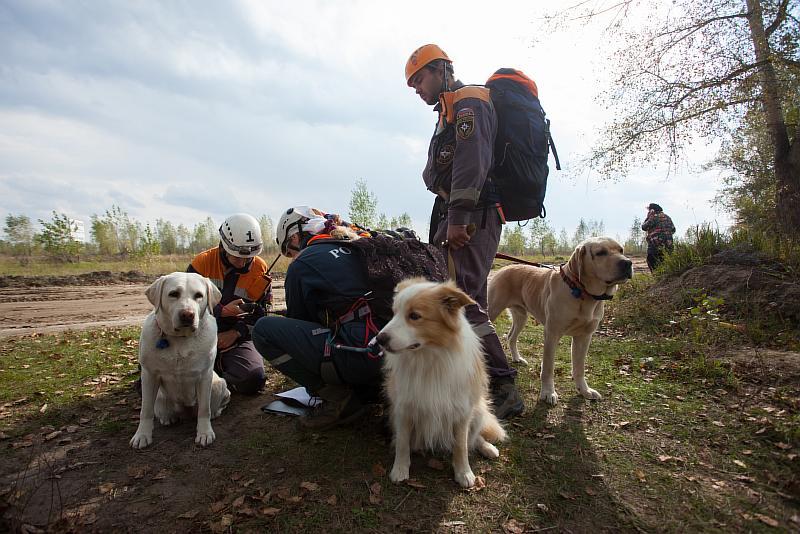 Вологодский кинолог стал одним из лучших в России