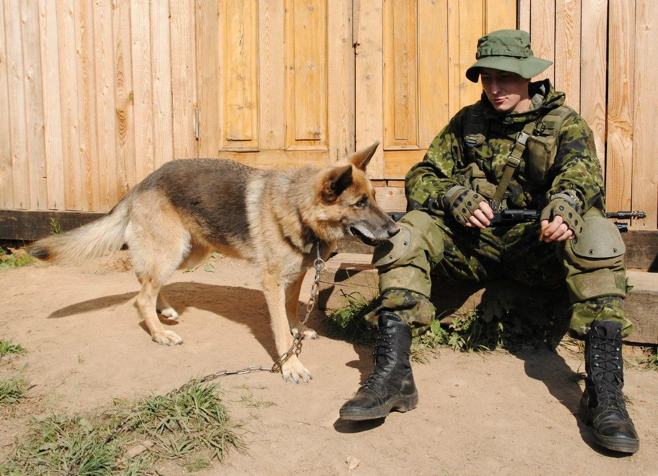 Студенты Вологодской молочно-хозяйственной академии будут лечить беспризорных собак
