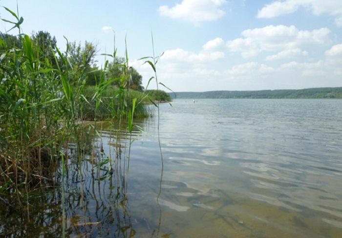 Трёхлетняя девочка утонула в Вологодской области
