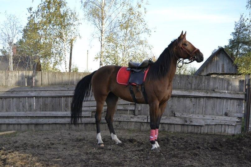 В Вологде хозяева лошадей задержали цыган, укравших животных с поля