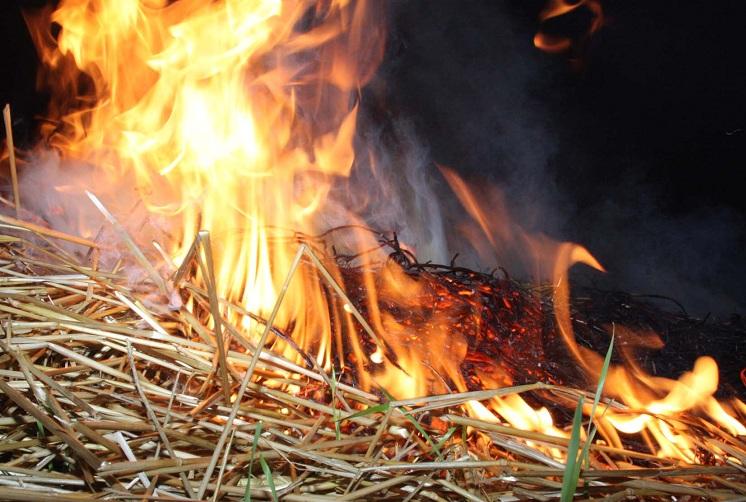 В колхозе в Вологодской области сгорели 70 тонн заготовленного на зиму сена