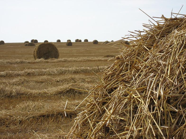 Поддержка сельского хозяйства Вологодской области может сократиться