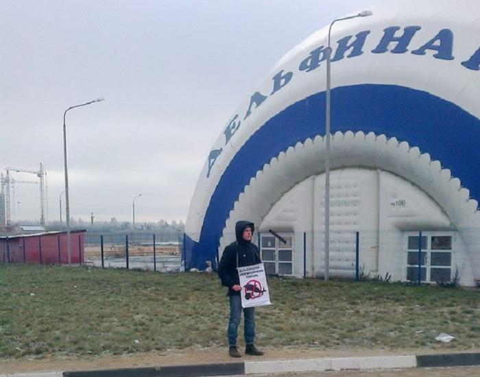 В Вологде проходят пикеты против дельфинариев