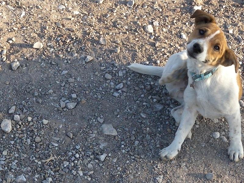 Череповчанин убил собаку и собирался её съесть