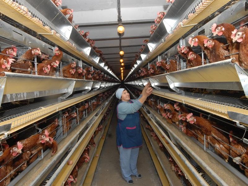 Птицефабрика «Ермаково» передана в аренду ООО «Вологодская птица»