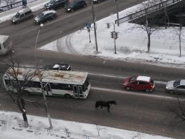 Лошадка прогуливается по улице Мира.