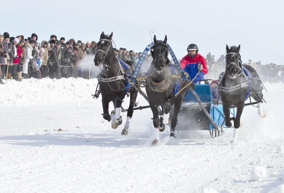 Чемпионат русских троек пройдет в Вологодском районе