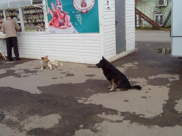 Кто обязан очистить от бродячих собак территорию ООО Вологодский городской рынок
