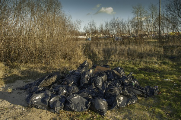 Ещё не поздно очистить берег Шексны