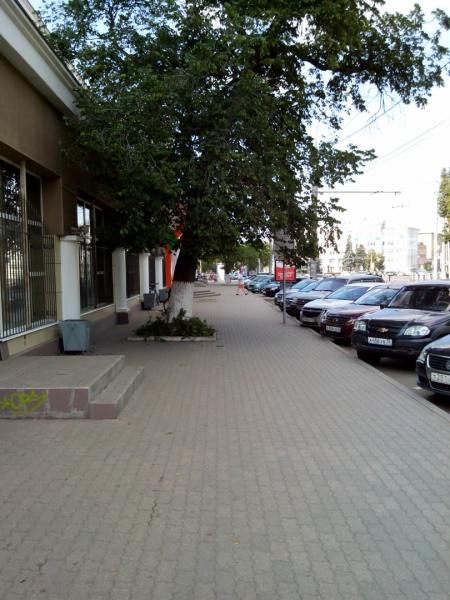 Нависающие над тротуарами ветки деревьев, или комфортная среда своими руками