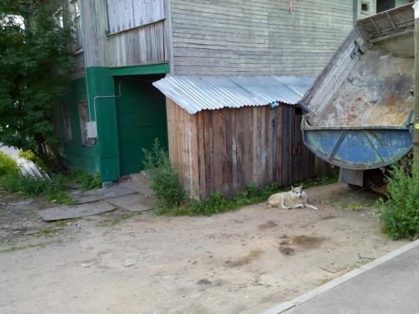 Злобная собака-хамелеон с ул. Воровского. Будьте осторожны, проходя здесь, особенно с детьми.