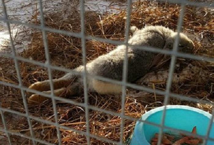 """Череповецкие власти не продлят договор аренды с зоопарком """"Лукоморье"""", если он не исправит нарушения"""