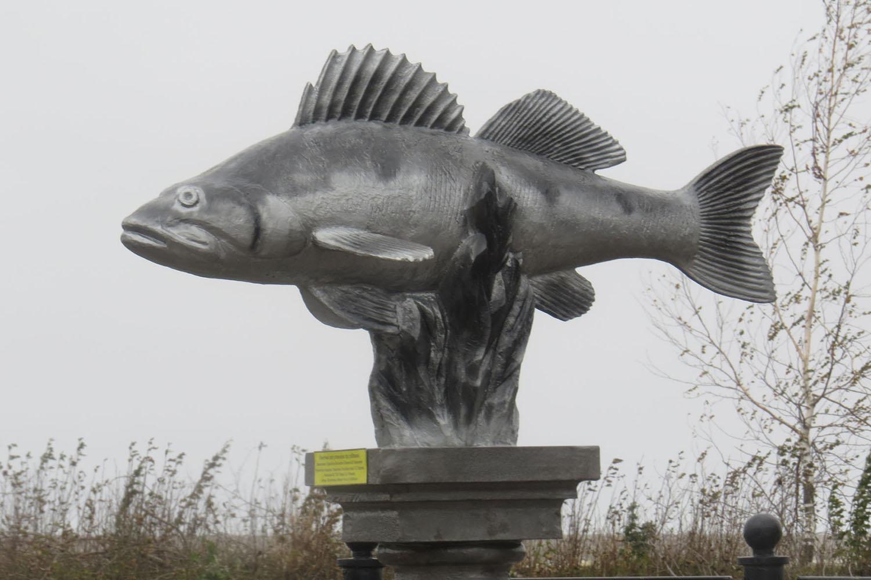 В Белозерске открыли памятник судаку, сняв с него рыболовную сеть