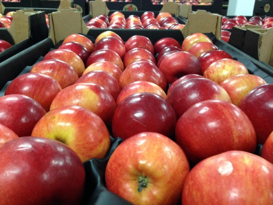 В Вологодской области арестовали польские яблоки, запрещенные к ввозу в Россию