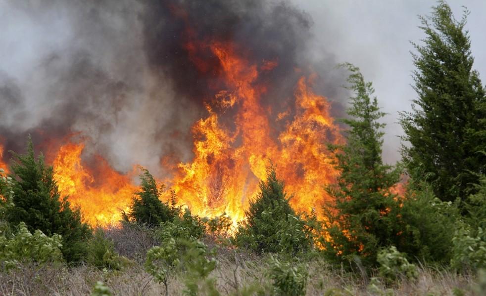 Вологодский губернатор заявил, что область готова обеспечить пожарную безопасность лесов