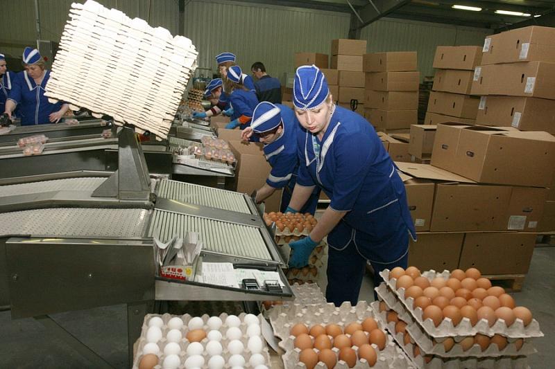 «Вологодский центр птицеводства» не будет отвечать перед «Россельхозбанком» по договорам поручительства за птицефабрики-банкроты