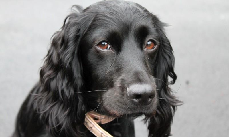 Хозяева заболевшей бешенством собаки находятся под наблюдением медиков