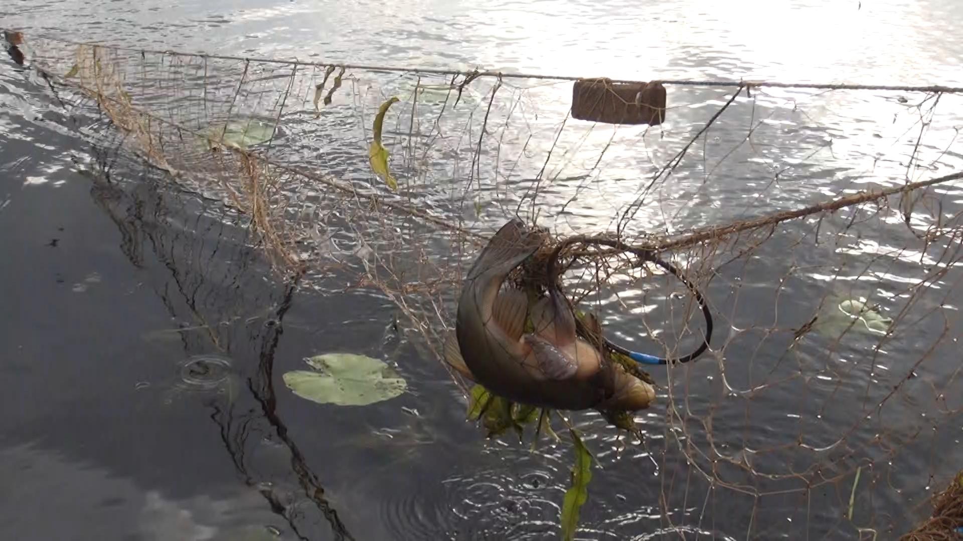 Полицейские поймали на Белом озере рыбаков-браконьеров