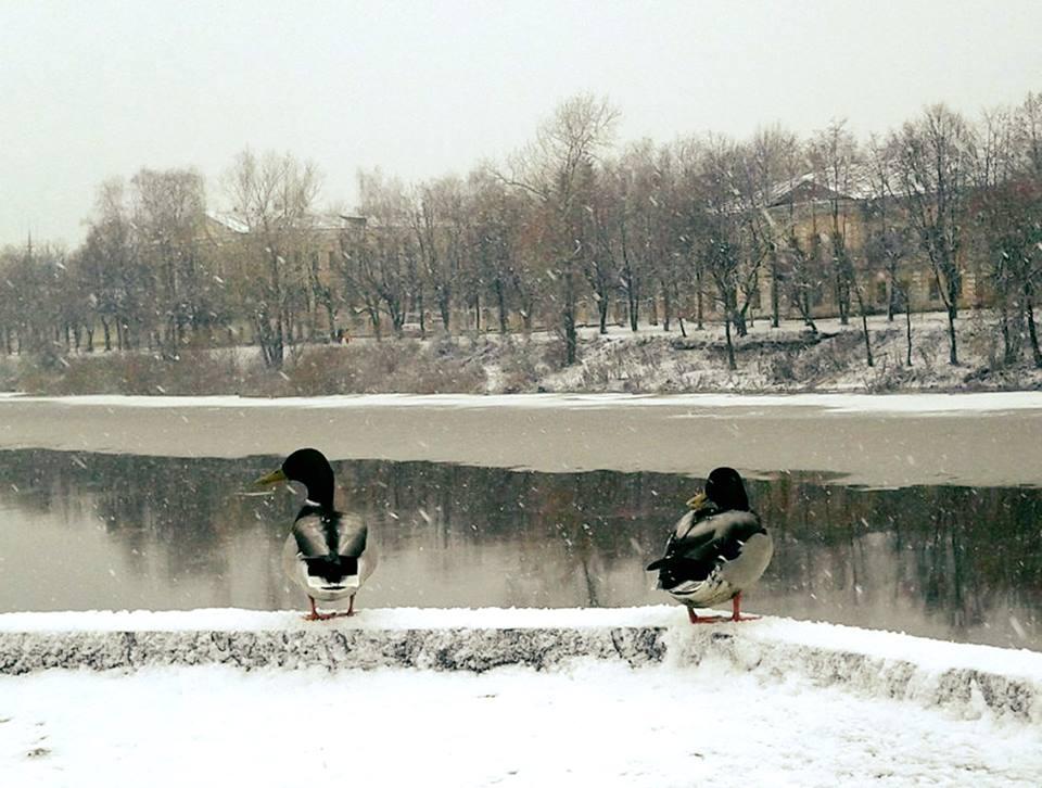 Зима все-таки придет в Вологодскую область