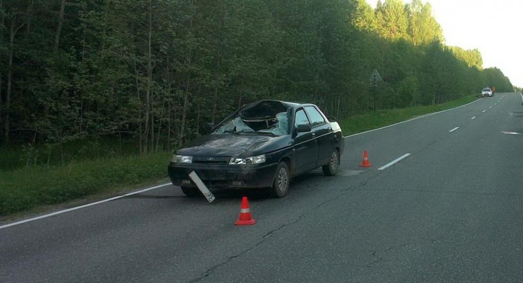 Автомобиль сбил лося в Череповецком районе