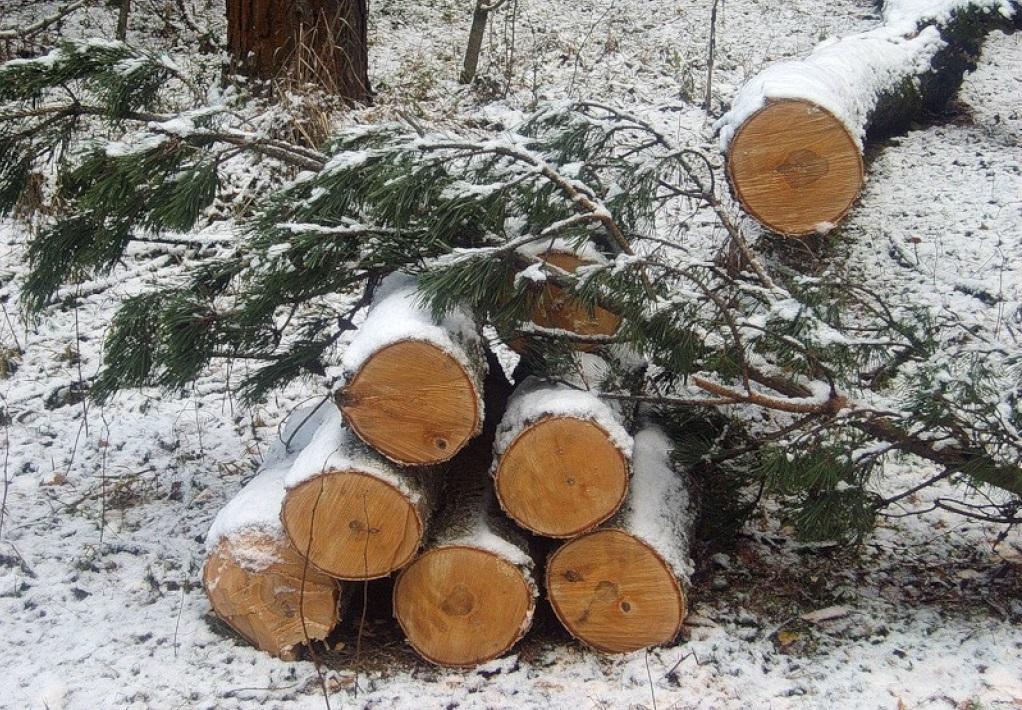 В Чагодощенском районе наворовали леса на 4,3 млн рублей