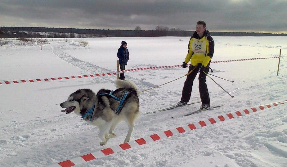 Гонки на собачьих упряжках пройдут в Вологодском районе