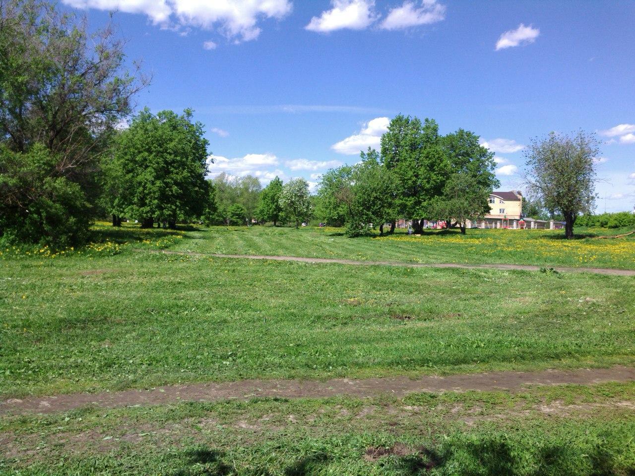 В Вологде продолжают собирать подписи за увеличение площади зеленых зон