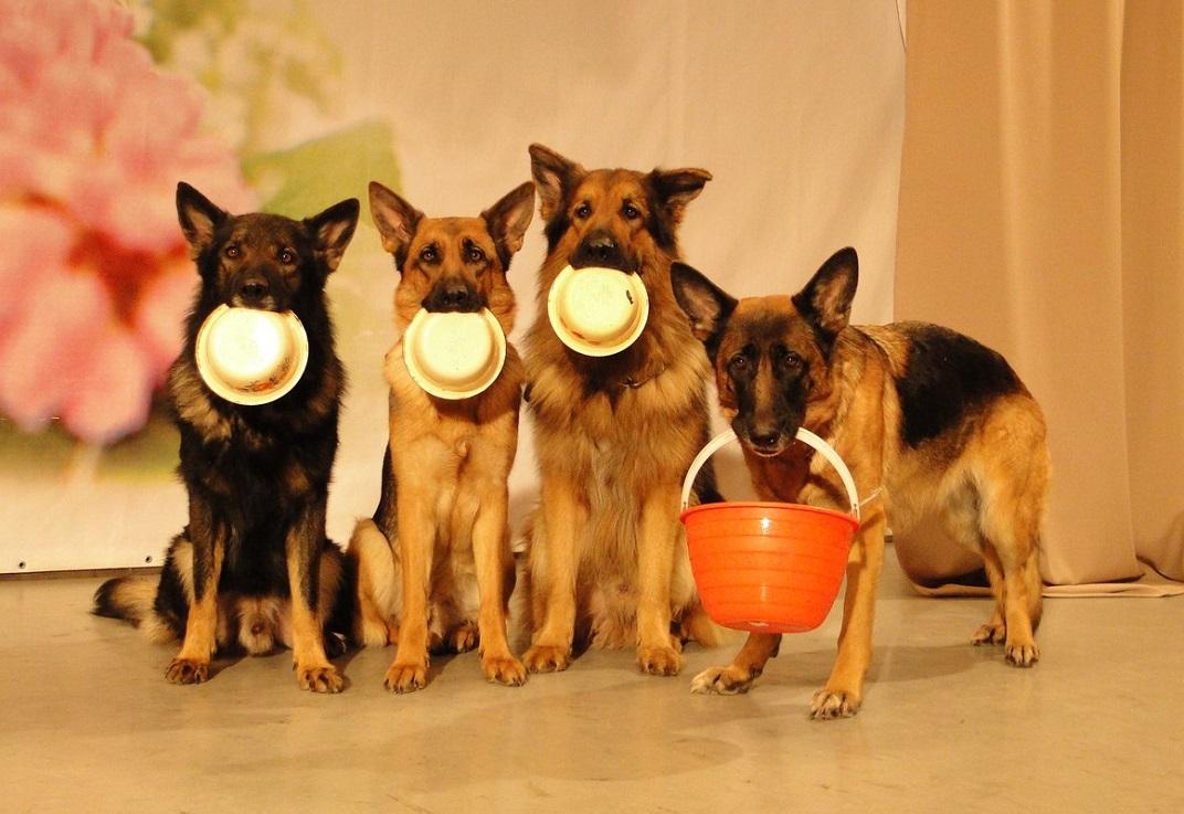 Интерпол с хвостом и ушами: в Череповце появился театр собак