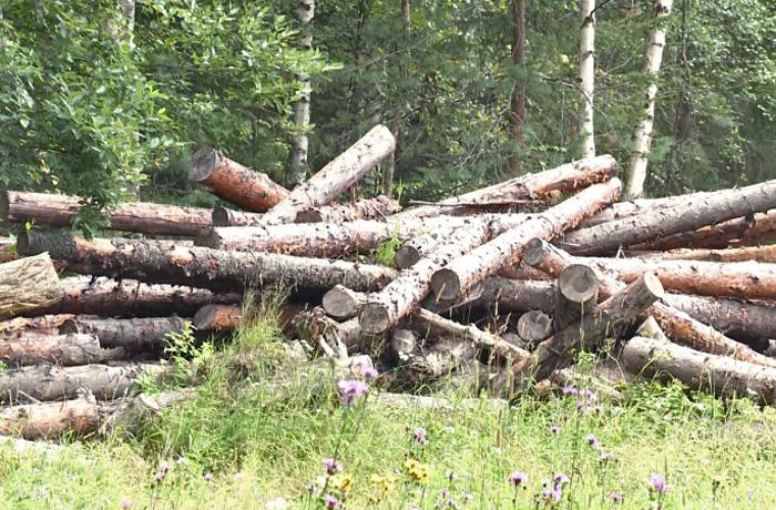 Очередная незаконная рубка вологодского леса: ущерб свыше 1 млн рублей