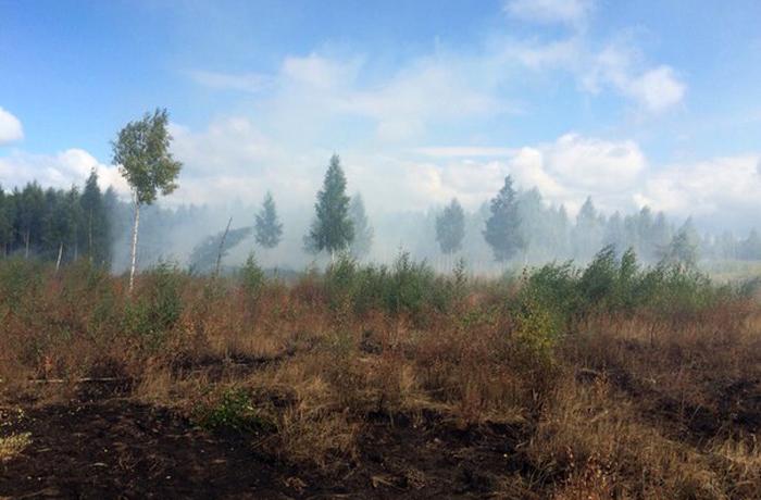 Торфяники под Вологдой продолжают гореть, теперь тушить их будут чиновники