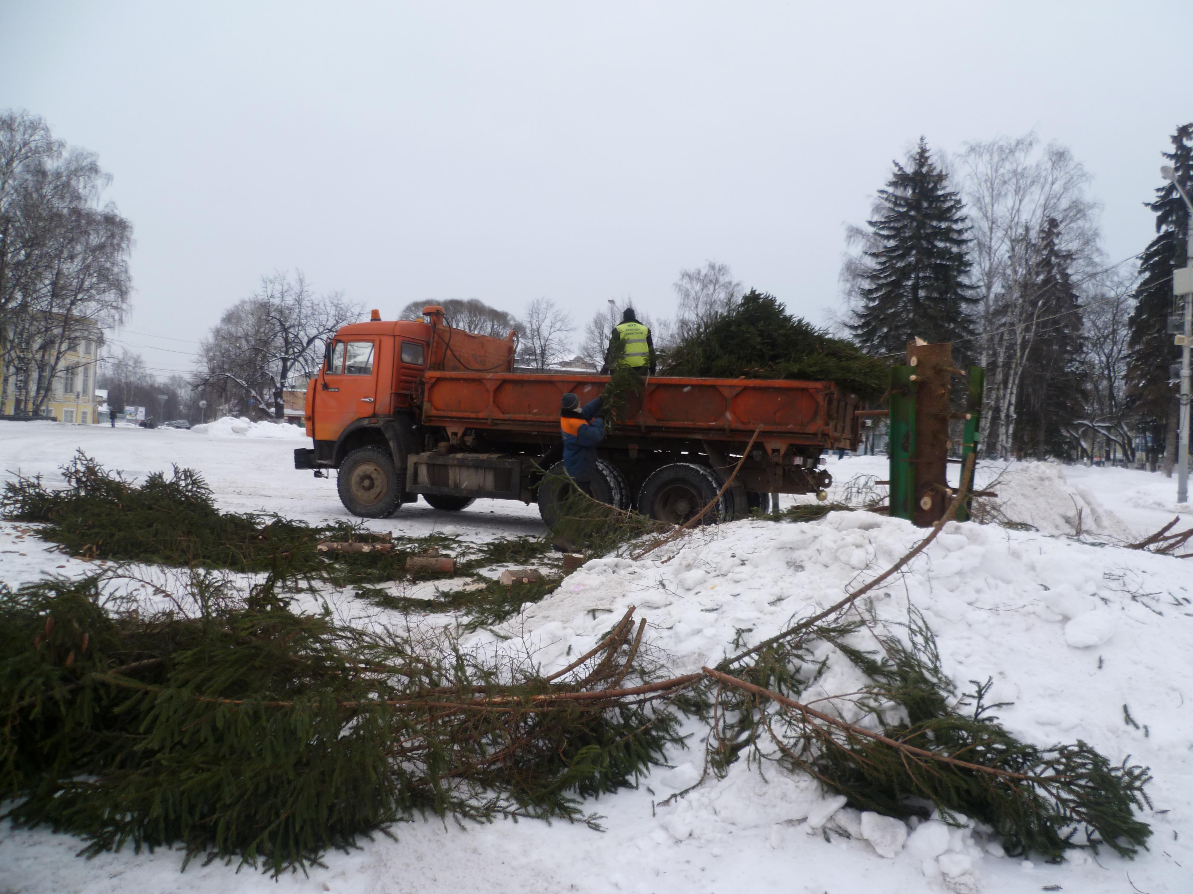 Новогодние ели в Вологде пойдут на чучело Масленицы