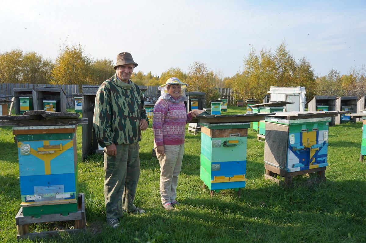 Вологодский пасечник придумал собственную технологию пчеловодства
