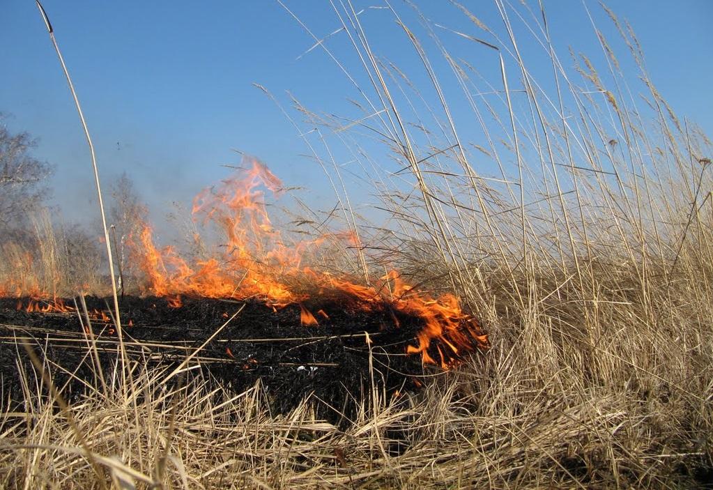 В Вожегодском районе после пала травы загорелись жилые дома