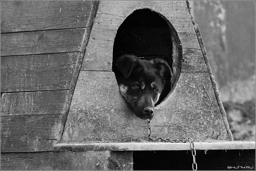 Двое жителей Великоустюгского района отделались условным сроком за съеденную собаку