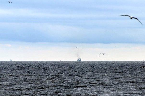 На Белом озере произошла массовая гибель рыбы