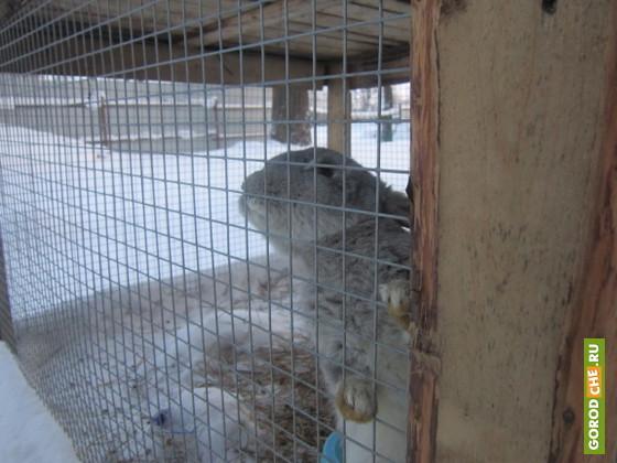 В Череповце на время закрыли зоопарк, где замерзали животные