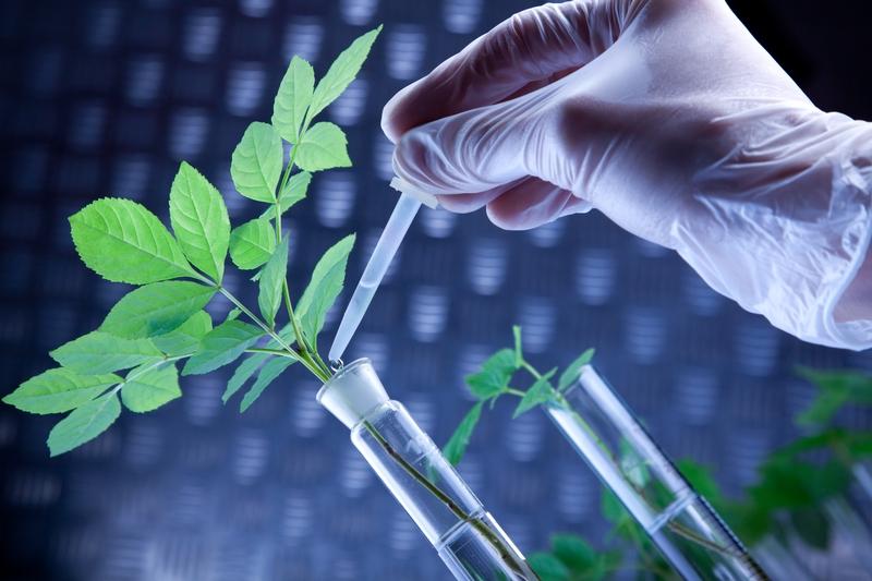 Биотехнологический кластер создадут в Вологодской области