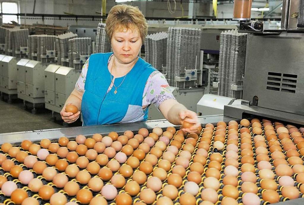Бывшие работники «Вологодской птицефабрики» пойдут на подшипниковый завод