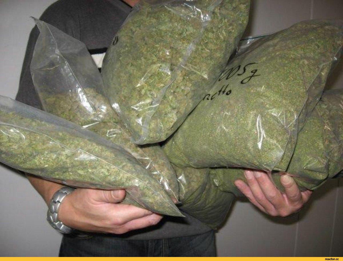 Продавец марихуаны в Вологде пояснил полицейским, что не имеет других источников дохода